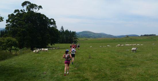 Yarışın başından sonuna yeşil bir doğa, koyunlar, taş veya ahşap çitler göreceğimi henüz bilmiyorum.