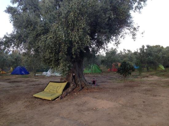 Zorbey'in zeytin bahçesi ve komşu tarla kamp alanı olarak düzenlenmiş.